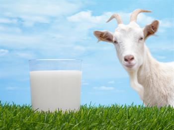 Lizozim Açısından Zengin Keçi Sütü, İshalin İyileşmesini Hızlandırıyor