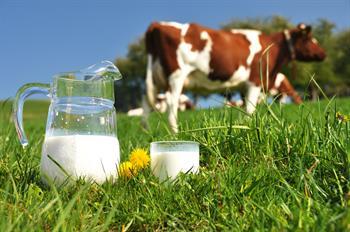 Kemik Sağlığı İçin Süt Ürünlerinden Fazlası Gerekiyor