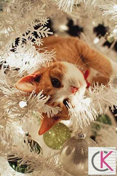 Kedili yılbaşı ağaçları